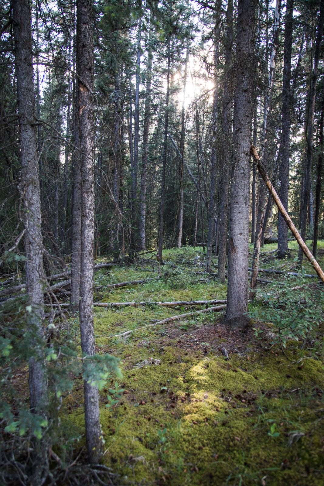 Banff (9 of 9)